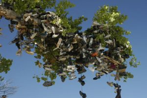 Cape Cod Images - Sneaker Tree